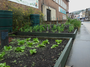 záhon salátu před školní budovou