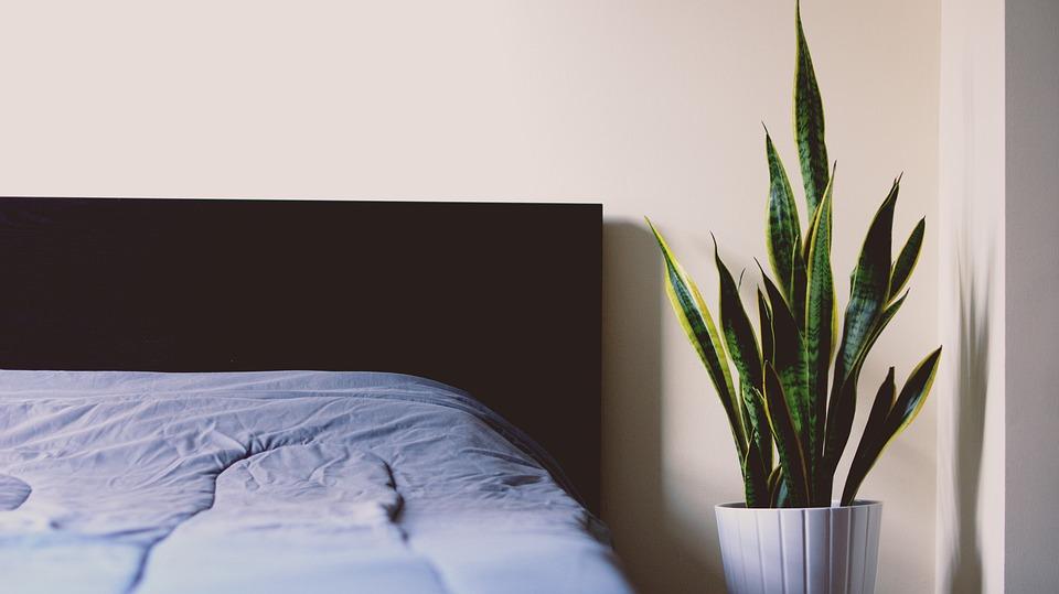 Tchynin jazyk vedle postele