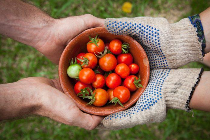 Podpora lokální ekonomiky je dnes stěžejní. Foto: Elaine Casap, Unsplash.com
