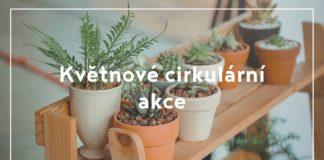 Plants in pots