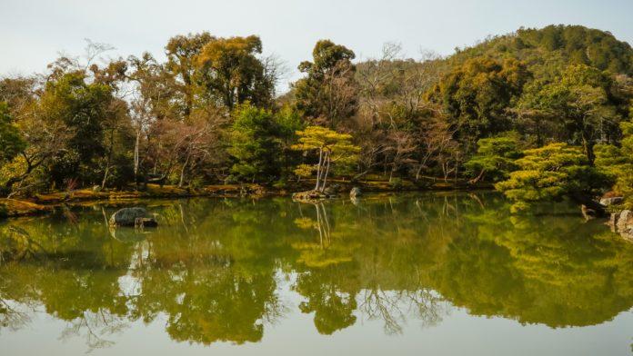 Technologie pro realizace efektivních spoluprací s přírodou nebo napodobování přírozených cyklů existují, potřebná je silná společenská vůle. Foto: Unsplash.com
