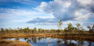 """""""Moje vize je ideálně taková, že dostaneme do volné krajiny i do měst co nejvíce stromů jako různověkou rozptýlenou zeleň."""" Foto: Jevgenij Voronov, Unsplash.com"""