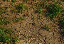 Suchá půda