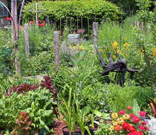 Permakultura se vyznačuje maximální plodností s minimem fyzické dřiny. Zdroj: JC Raulston Arboretum
